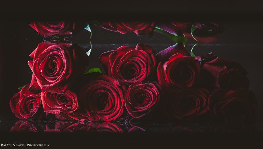 Rózsa műtermi makró